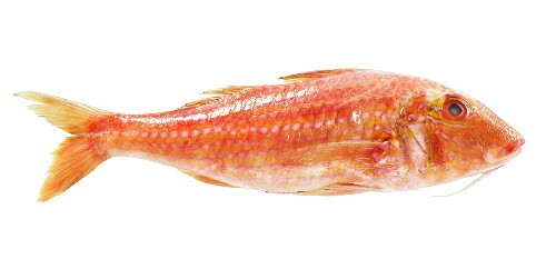 A fresh red mullet