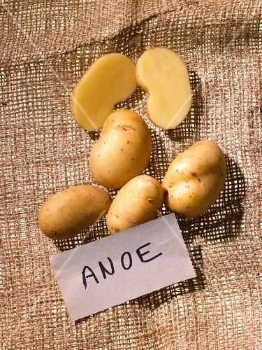 Organic Anoe potatoes