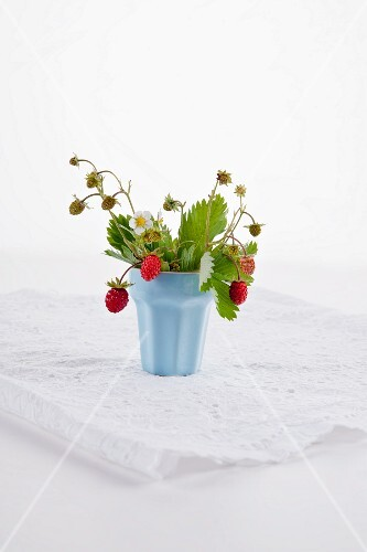 Wild strawberries in tub
