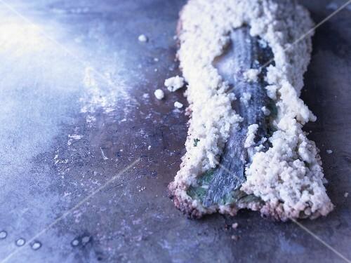 Mullet in a salt crust