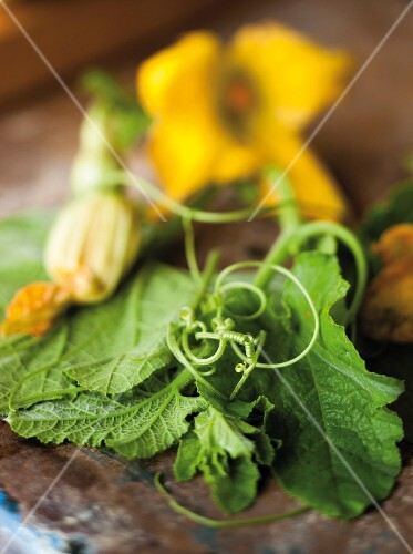 Courgette flowers with leaves
