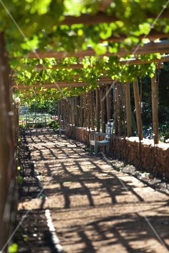 Garden in Drakenstein Valley, South Africa