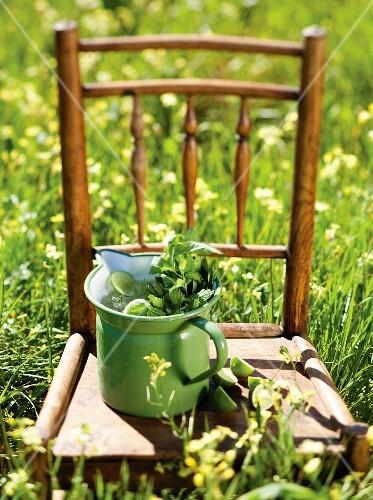 Lime and herb lemonade in a milk jug