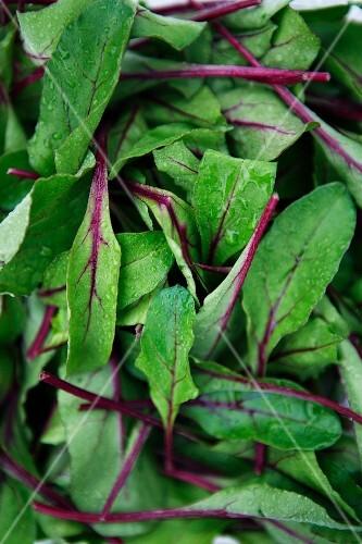 Freshly washed salad leaves