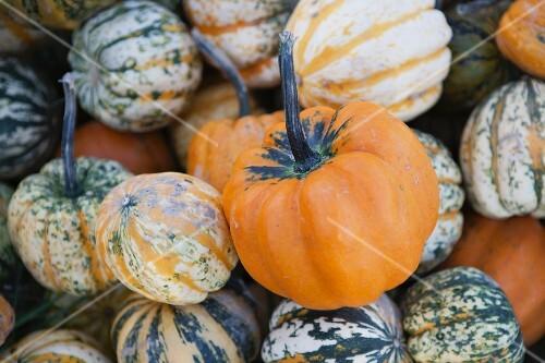Assorted ornamental gourds