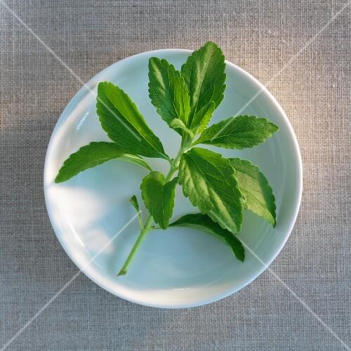 A sprig of stevia on a plate