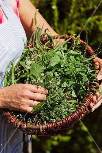 A basket of freshly picked herbs