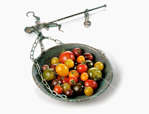 Wild tomatoes in a weighing dish