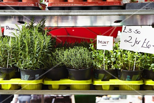 Various pots of herbs on a herb stall