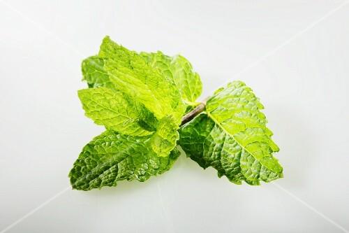 Cuba mint (mojito mint)