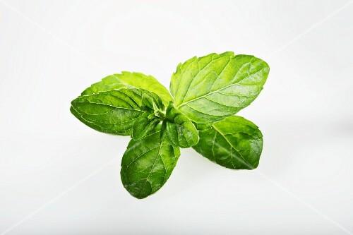 English green mint