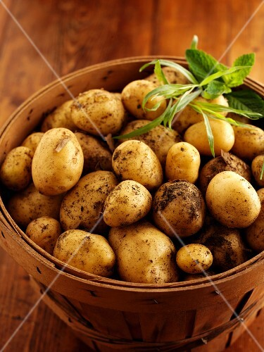 New potatoes and herbs in a wooden basket
