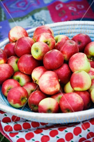 A basket of freshly picked apples