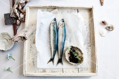 Fish on grease-proof paper with peppercorns, and shellfish
