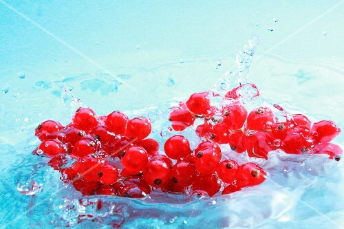 Redcurrants in water