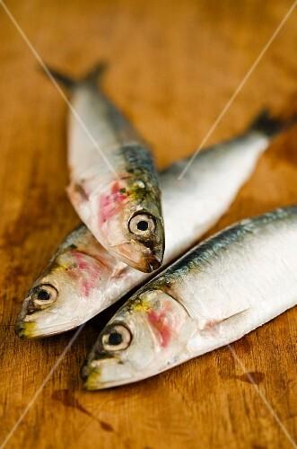 Three fresh sardines