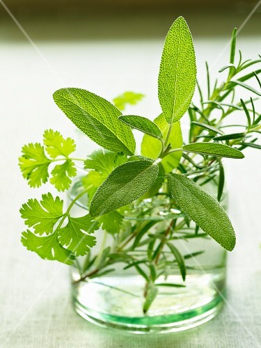 Sage, parsley and rosemary in a glass of water
