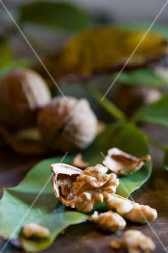 A cracked walnut on a walnut leaf