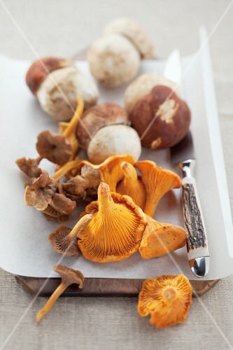 Fresh wild mushrooms on a piece of paper on a wooden board