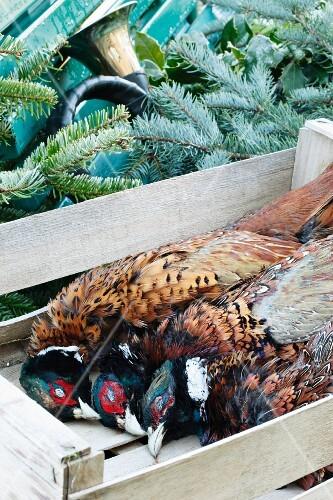Pheasants in a crate