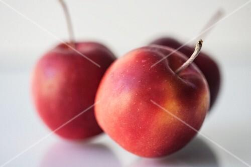 Three Crab Apples