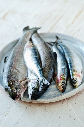 Fresh trout and sardines