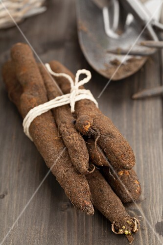 Freshly harvested black salsify on a wooden table
