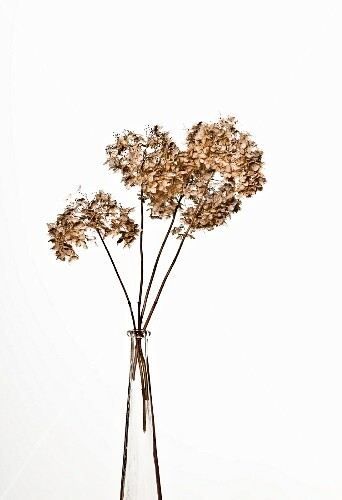 Dried flowers in a glass vase