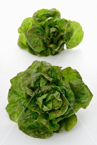 Two lettuces of the variety 'Rougette de Montpelier'