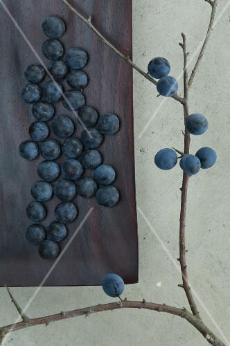 Sloes in a wooden dish and on a branch