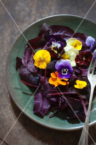 Red lettuce leaves with edible flowers