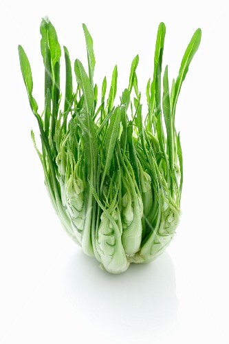 Puntarelle (variety of chicory)