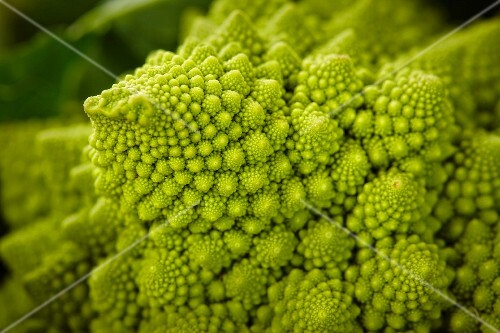 Romanesco (close-up)