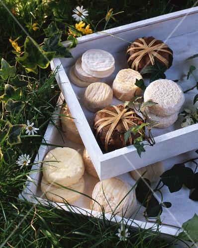 Assorted types of goat's cheese in a wooden box