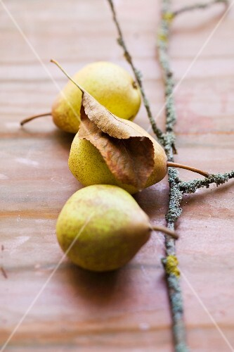 A twig with three pears