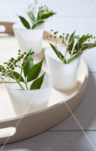 Unripe sprays of elderberries in cups