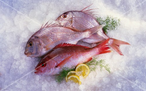 Red snapper and two sea bream on ice