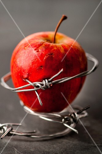 An apple in barbed wire