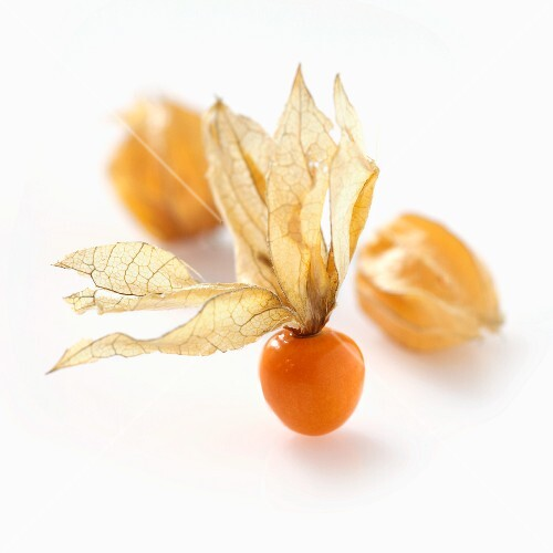 Physalis (no background)