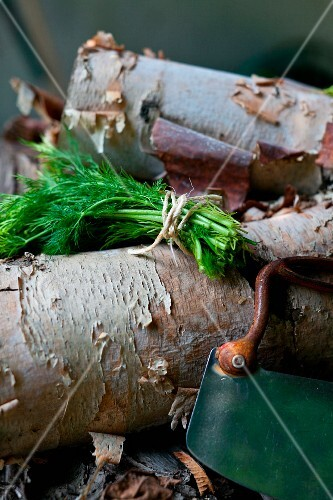 A Bundle of Fresh Dill with a Vintage Herb Chopper on a Pile of Wood