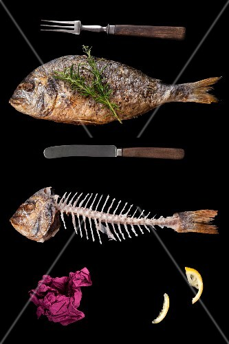 A still life of a fish and a fish skeleton