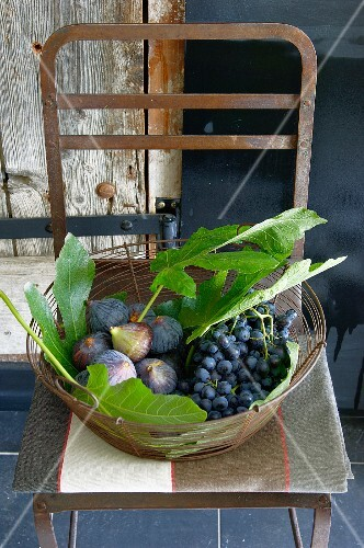 Fresh figs with leaves and black grapes in a wire basket on a kitchen chair