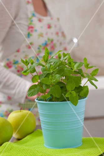 Fresh mint in a flowerpot and a green apple, with a woman in the background