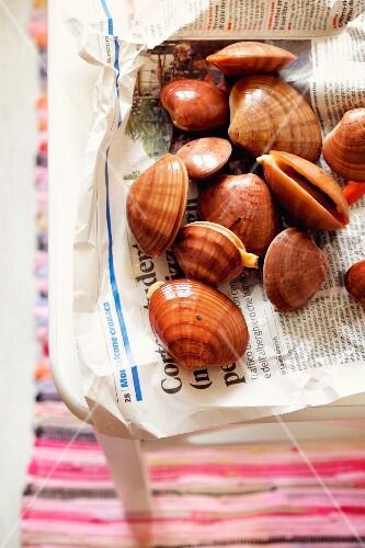 Fresh shellfish on newspaper