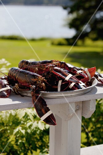 Fresh Lobsters on a Platter Outdoors