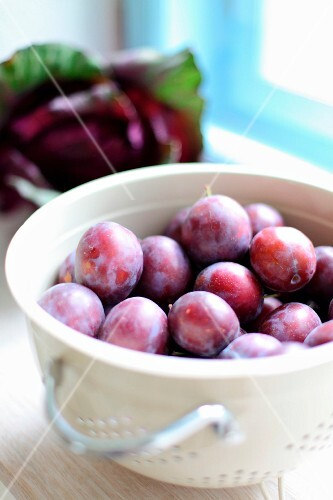 Freshly picked plums in a colander