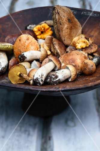Mixed wild mushrooms in a wooden bowl