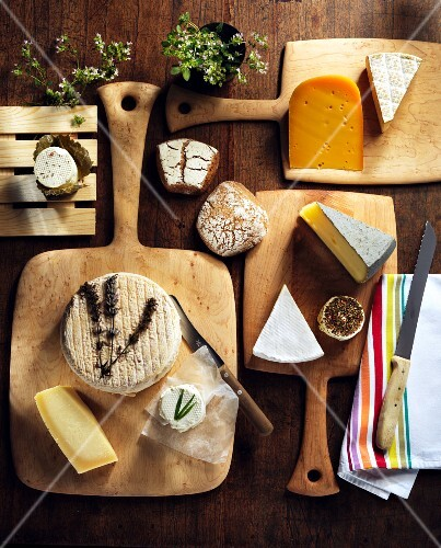 Assorted types of cheese on wooden boards