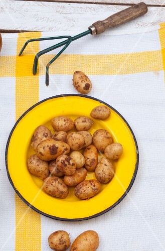 New potatoes on a yellow plate