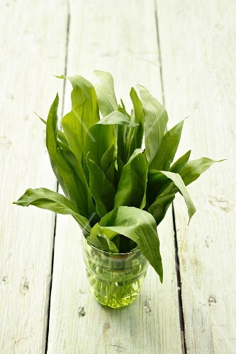 Fresh wild garlic leaves in a water glass on a wooden surface